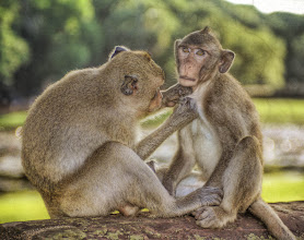 Photo: Monkeys cleaning - from Trey Ratcliff at http://www.StuckInCustoms.com - all images Creative Commons Noncommercial