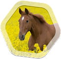 Horse Live Wallpapers icon