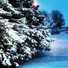 Photo: El #invierno en #Québec, así amaneció la región de #Lanaudière hoy. Pronostican 40cm de # nieve hoy