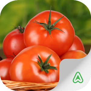Tải Game Pragas do Tomate