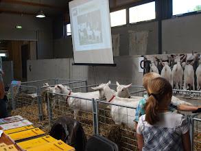 Photo: Presentatiegroep witte geiten van W. van Rheen.