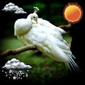 Pássaro exóticos relógio tempo icon