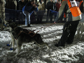 Photo: Volunteers hold the dogs.