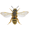 Bee simulator icon