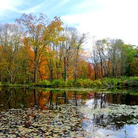 Fall 4 by Martin Stepalavich - Landscapes Prairies, Meadows & Fields
