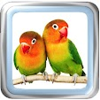 Lovebird ch.. file APK for Gaming PC/PS3/PS4 Smart TV