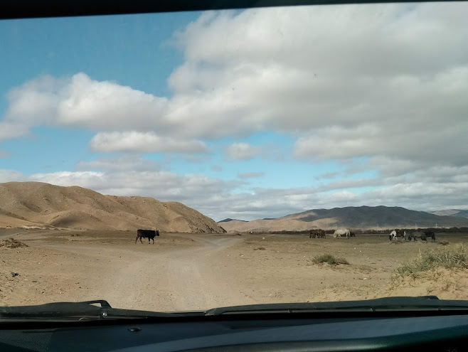 道を渡る牛