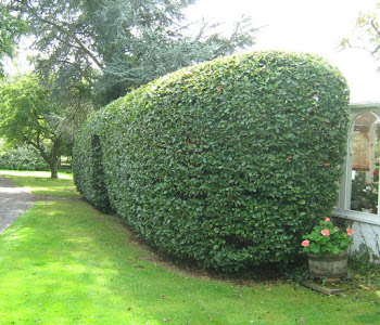 hedge cutting and tree surgery worcester
