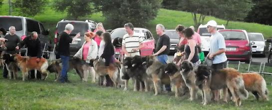 Photo: Lot d'élevage