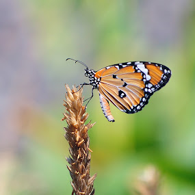 on top by Dhannie Setiawan - Animals Insects & Spiders ( butterfly, macro, yellow, insects, top )