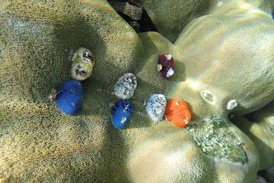 Experience colourful corals