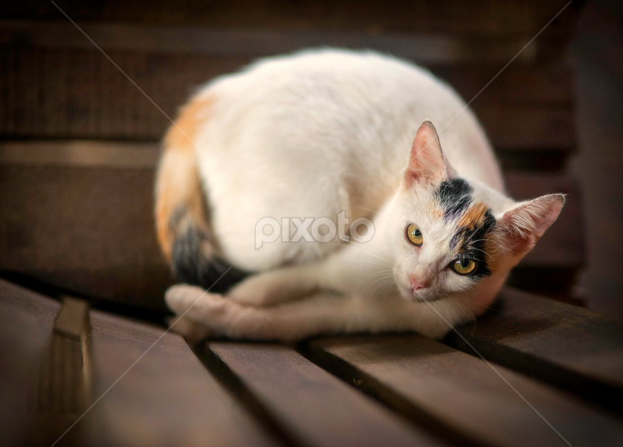looking up by Annette Flottwell - Animals - Cats Portraits ( amarillo, gato, rebaño, ginger, chat, gatos, cat, gata, manada )