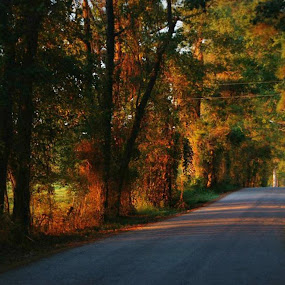 Golden road by Brenda Shoemake - Transportation Roads (  )