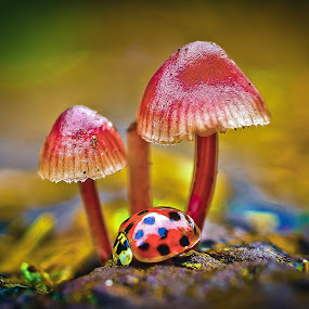 by Darrell Raw - Nature Up Close Mushrooms & Fungi ( Fantasy, Fairies, ColoRiffic, Mystical )