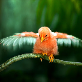 Mommy...I Can Fly Now !! by Muhammad Buchari - Animals Other
