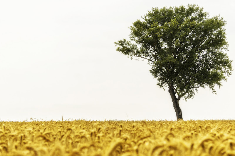 Charyou Tree... si mietano le messi di RickTwice