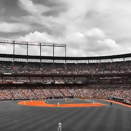 Camden Yards by Chris Montcalmo - Sports & Fitness Baseball ( oriole park, baltimore, baltimore orioles, orioles )