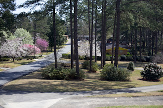 Photo: every neighborhood should be so beautiful