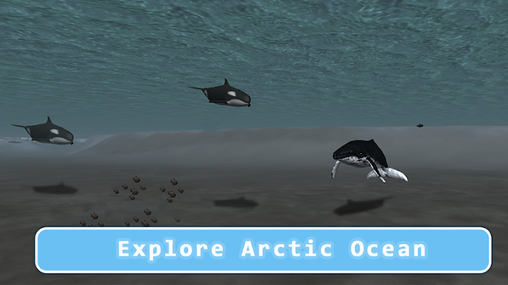 Killer Whale Orca Simulator - screenshot