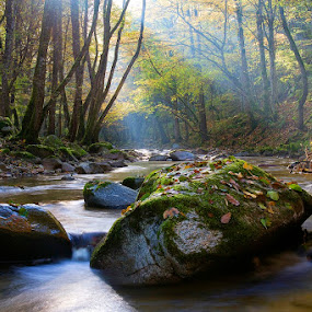 by Siniša Almaši - Nature Up Close Rock & Stone ( water, up close, stream, forest, morning, landscape, nature, sunrays, trees, view, stones, rocks, light, river,  )