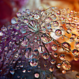 Wish To Wish ... Countless Wish by Marija Jilek - Nature Up Close Natural Waterdrops