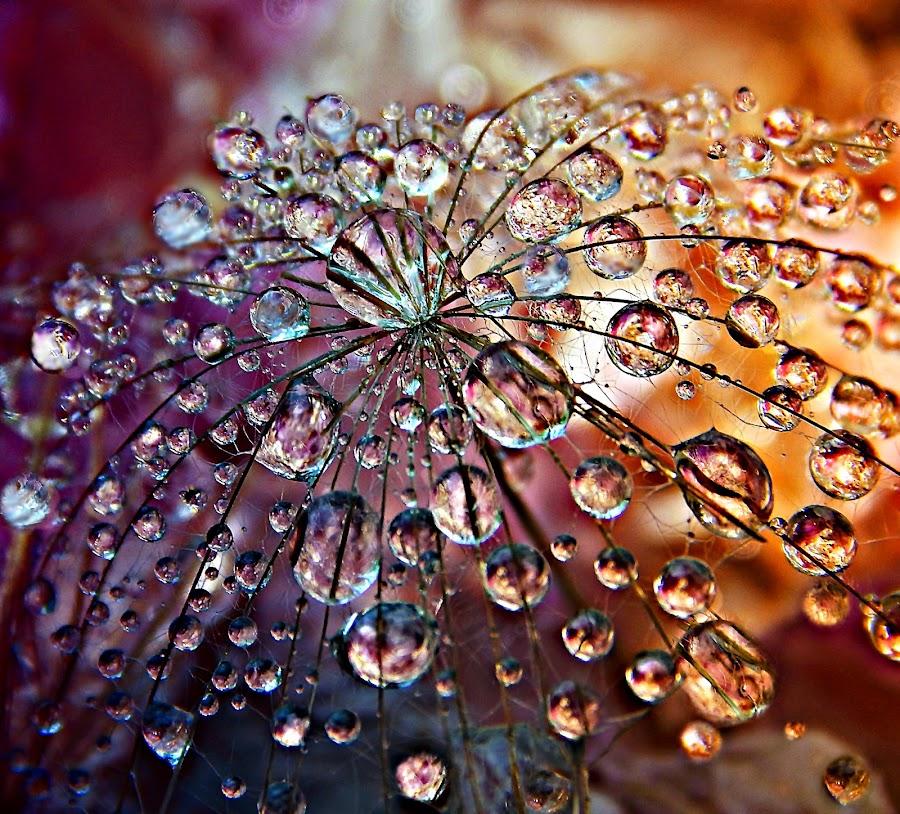 Wish To Wish ... Countless Wish by Marija Jilek - Nature Up Close Natural Waterdrops