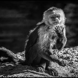 Monkey-2.jpg