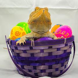 Dragon Eggz by Lourdes Olartecoechea - Public Holidays Easter ( lizard, easter, jesus, easter eggs, reptile, bearded dragon, easter bunny, easter basket )