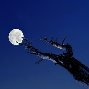 A wish to touch by Anup Biswas - City,  Street & Park  City Parks ( moon, blue sky, sky, tree )