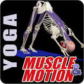 Muscle and Motion YOGA