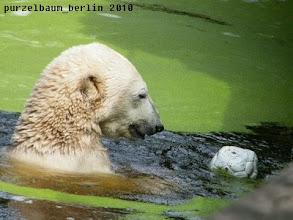 Photo: Hab ihn wieder, den Ball :-)