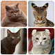 Download Cat Breeds Quiz - Game about Cats. Guess the Cat! For PC Windows and Mac