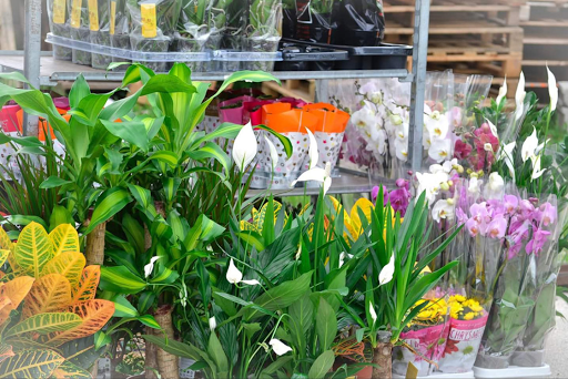 Cvjećare Budva, Nikšić, Kotor - Top 5 sobnih biljki iz asortimana Garden Gold