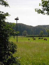 Photo: Störche am Riedweg 1.7.07