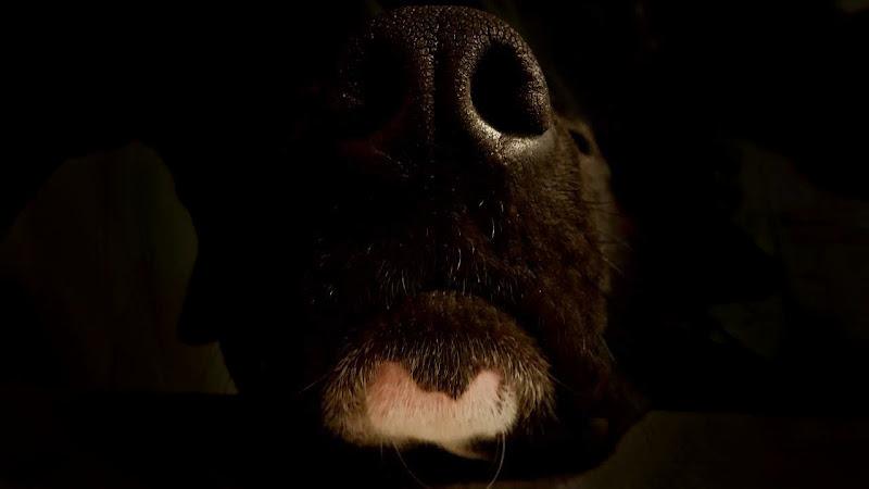 Sleeping nose di Rosse