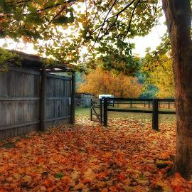 Autumn on the farm by Cheryl Hesketh - City,  Street & Park  Vistas ( leaves, tree, farm, autumn, austria )