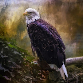 The Conqueror by Julie Smith - Digital Art Animals ( # soar, #eagle )