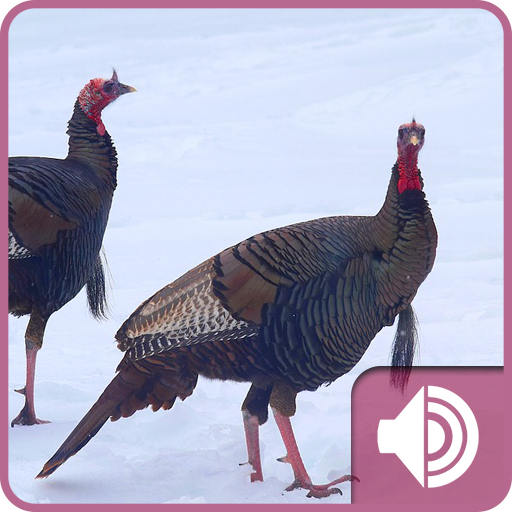 st natural sound turkey - 512×512