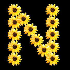 N by Janna Morrison - Typography Words ( the letter n in yellow flowers, typography, alphabets, script, a, b, c )