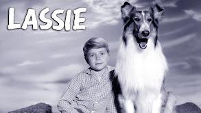 Lassie thumbnail