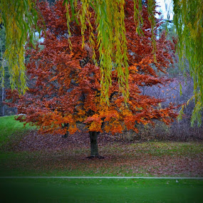 Fall Colours at McGuire Lake. by Lena Arkell - City,  Street & Park  City Parks (  )