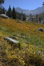 Photo: Meadow and Lion Rock