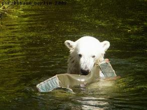 Photo: ... wird froehlich im Wasser bespielt :-)