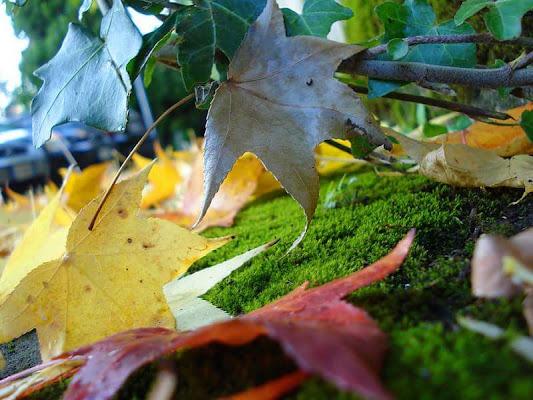 colori in autunno di Morrilwen