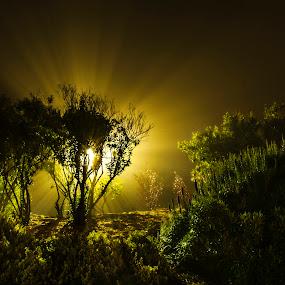 Light by Artem Kevorkov - City,  Street & Park  City Parks ( golden gate park, park, fog, california, green, plants, night, light, garden, san francisco, rays )