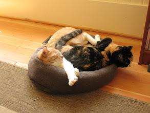 Photo: Kitty pile.