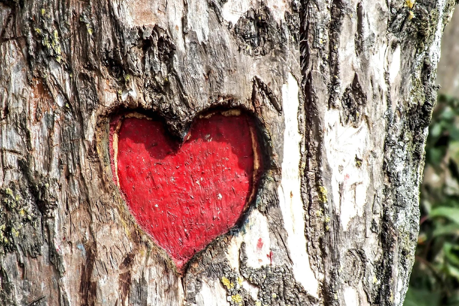 heart engraved tree trunk.jpg