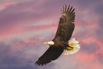 Photo: Pearland Eagle Sunset