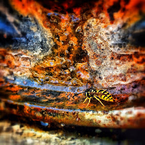 Thirsty Wasp by Geary LeBell - Instagram & Mobile iPhone ( water, wasp, sting, thirsty, drink, stinger, yellow jacket wasp, rusty, yellow jacket, insect, barrel, rust )