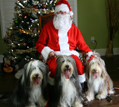 Photo: Santa Jean with Momma Bella and her pups, Maise and Neela